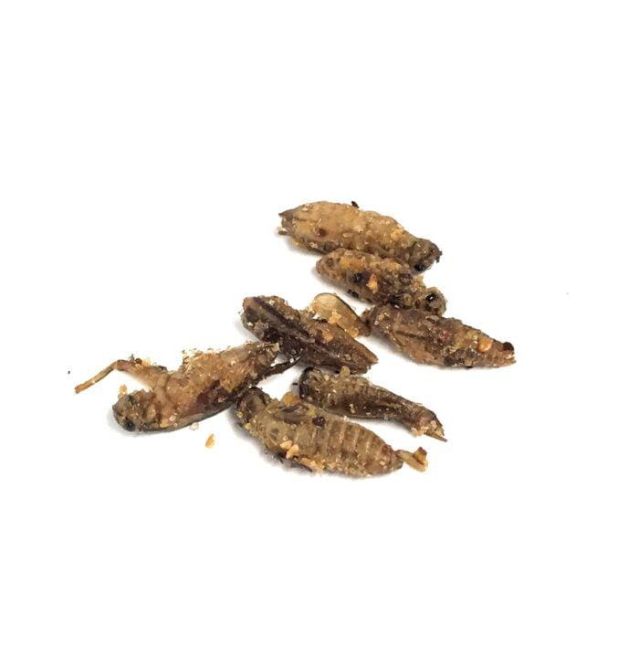 Seasoned Crickets Snack