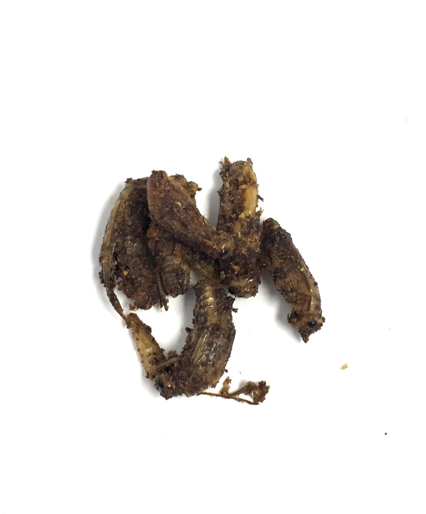 Chili Powder Crickets